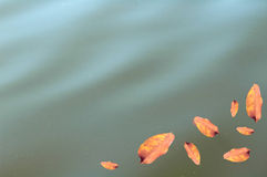 Dry leaf on water Royalty Free Stock Images