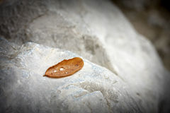 Dry leaf with water drop Stock Images