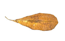 A dry leaf Royalty Free Stock Photography