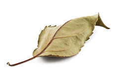 Dry leaf on a white Royalty Free Stock Photos