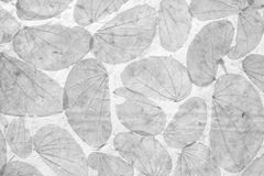 Dry leaf on white paper Stock Image