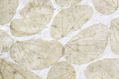 Dry leaf on white paper Stock Images