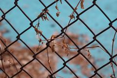 Dry leaf on wire mesh. Close up stock photo