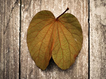 Dry leaf on wood Royalty Free Stock Image