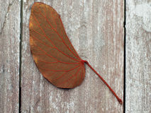 Dry leaf on wood Stock Images