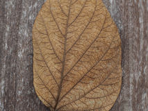 Dry leaf on wood Stock Photography