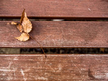 Dry leaf on the wooden bench wallpaper background Royalty Free Stock Photography