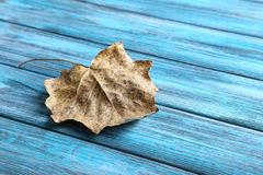 Dry leaf. On a wooden table Stock Image