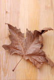 Dry leaf on a wooden table Royalty Free Stock Image