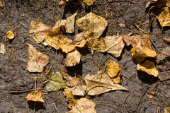 Dry leafage on soil. Abstract natural background Royalty Free Stock Photos