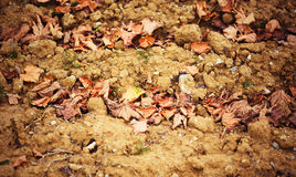 Dry leafage on soil - abstract natural background. Photo of dry leafage on soil - abstract natural background Royalty Free Stock Photography
