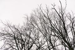 Leafless branches in winter. Dry and Leafless branches in winter stock photography