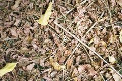 Dry leafs Stock Afbeeldingen