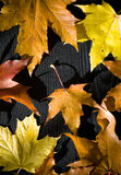 Dry leafs Royalty Free Stock Image