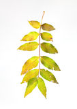 Dry leafs Royalty Free Stock Photography