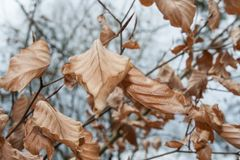 Dry leafs on a beech stock photography
