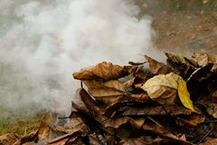 Dry leafs burning in forest , producing ash and smoke stock image