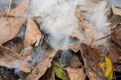 Dry leafs burning producing ash and smoke stock photo