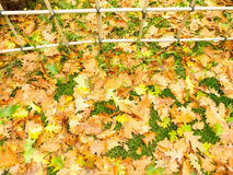 Dry leafs Royalty Free Stock Images