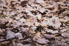 Dry leafs on the ground stock photos