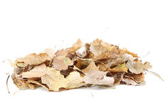 Dry leafs Stock Images