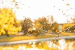 Dry leafs with spider web in the sunset Royalty Free Stock Photos