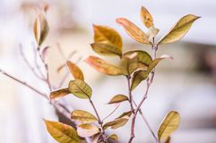 Dry Leafs In Winter Soft Focus Background Stock Photos