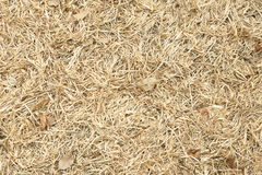 Dry Leave Stock Photography