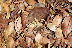Dry leave Royalty Free Stock Photo