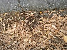Dry leave brown Stock Images