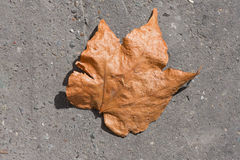 Dry leave concrete Royalty Free Stock Photo