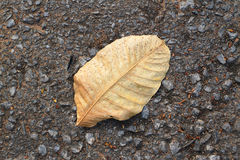 Dry leave Royalty Free Stock Images