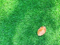 Dry leave. On the grass Royalty Free Stock Photo