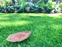 Dry leave. On the grass Royalty Free Stock Image