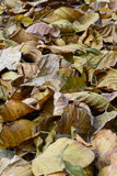 Dry leave Stock Image