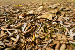 Dry leaves Stock Image