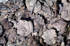 Dry leaves Stock Photography