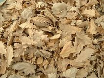Dry Leaves. Close up photo of dried leaves Royalty Free Stock Photography