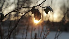 Dry leaves against a background of bright sun in winter. slow motion video.  stock footage