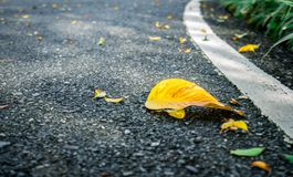 Dry leaves on asphalt road background Royalty Free Stock Photography