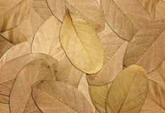 Dry leaves autumn background Royalty Free Stock Images