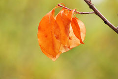 Dry leaves at autumn Royalty Free Stock Photos
