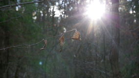 Dry leaves in autumn forest. Leaves and trees in the autumn forest lit by the sun stock video footage