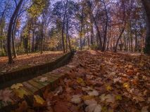 Dry leaves in autumn on the ground of a park and watering meadow stock images