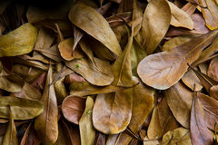 Dry leaves background. Deposition dry leaves a brown background color beautifully Stock Photos
