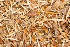 Dry leaves. Stock Images