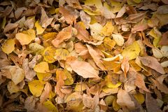 Dry leaves background Stock Photos