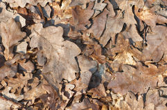 Dry_leaves_background. Dry leaves as nature background Stock Images