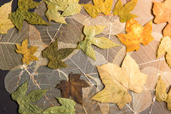 Dry leaves background Royalty Free Stock Photography