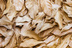 Dry leaves  for background Royalty Free Stock Photography